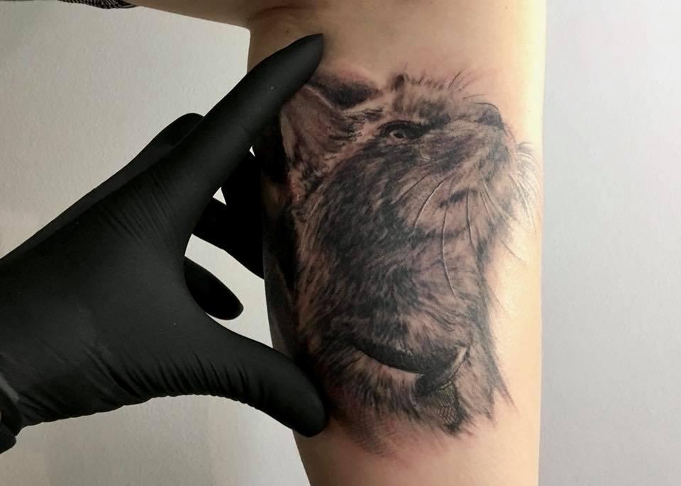 tattoo studio anansi münchen munich laszlo artist tätowierer cat katze portrait realistisch